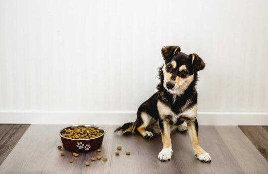Bodenschutzmatte, Haustier, Futter